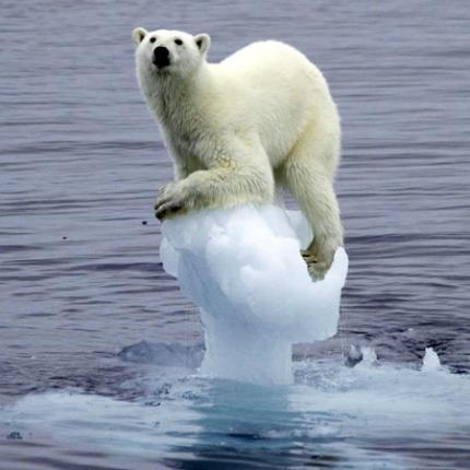 climatechangepolarbear